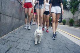 DUBLEKICK Girlsのグループ名はMOMOLANDに決定。サバイバル番組がMnetで放送。